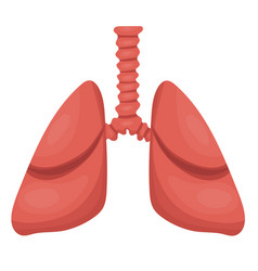 lungs icon flat style internal organs vector image