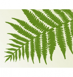 Single fern frond vector