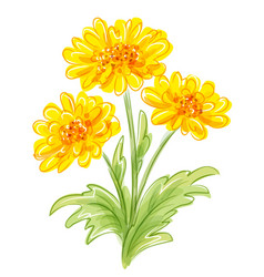 Three yellow flowers eps10 vector
