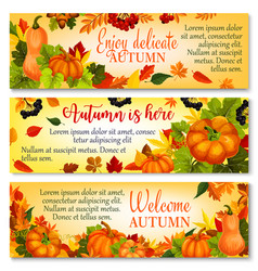 Autumn banner with pumpkin fallen leaves berry vector