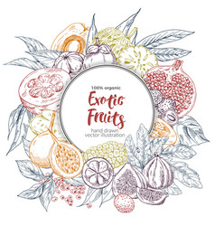 exotic fruits round banner vector image