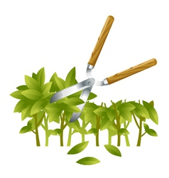 Trimming bushes vector