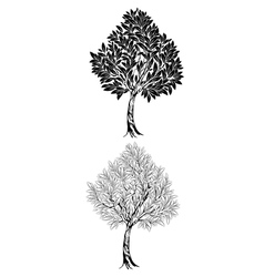 Two young contour tree vector image