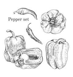 Peppers ink sketches set vector image