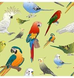 Parrots set pattern vector image