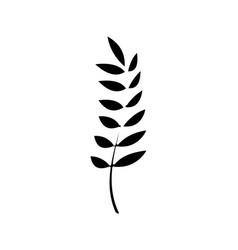 contour healthy wheat organ plant nutricious vector image vector image
