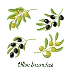 set of realistic olive branches vector image vector image