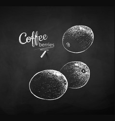 Chalk drawn sketch whole coffee berries vector