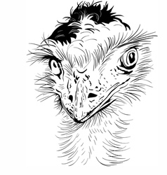 funny Ostrich Bird vector image