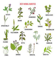 Best diuretic herbs set vector