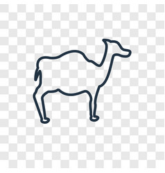 dromedary concept linear icon isolated on vector image