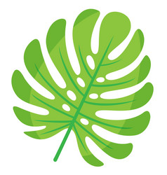 Monstera leaf foliage tropics decoration vector
