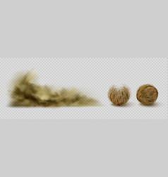 Tumbleweeds and sandstorm cloud desert plants vector