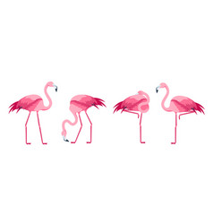 cartoon pink flamingo bird set vector image