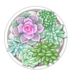 various succulents in pot echeveria jade plant vector image vector image