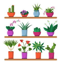 plants in pots on the shelves vector image