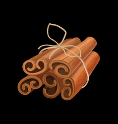 Bunch of cinnamon sticks tied with twine fragrant vector