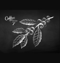 Chalk drawn sketch coffee branch vector