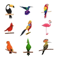 Exotic Birds Set vector image