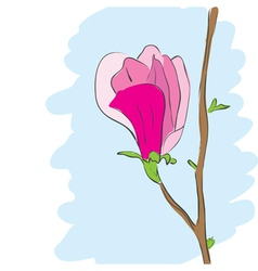 magnolia pink flower blossom vector image