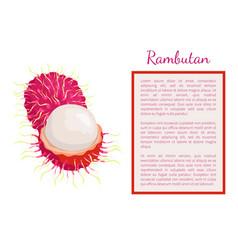 Rambutan exotic juicy fruit poster frame vector
