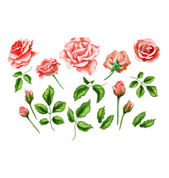 Realistic rose flower leaves stem set vector