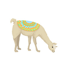 white graceful llama alpaca animal in bright vector image