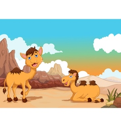 funny two camel cartoon with desert landscape back vector image vector image