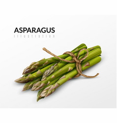 Asparagus bunch realistic image vector