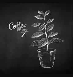 Chalk drawn sketch coffee tree vector