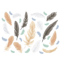 Feather bird isolated set vector