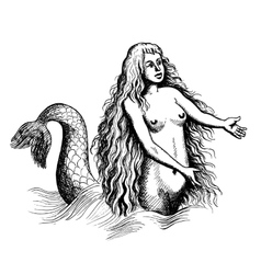 mermaid or siren vector image