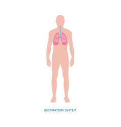 Respiratory system - human anatomy diagram of vector