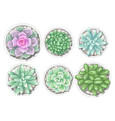 Set of succulents in pots echeveria jade plant vector