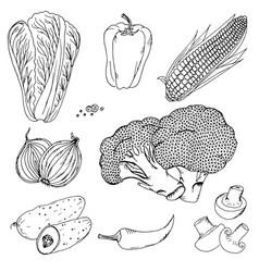 Vegetables corn mushrooms doodle vector