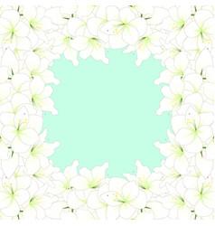 white amaryllis border vector image