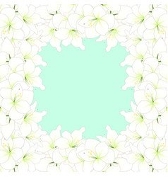 White amaryllis border vector