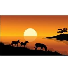 Zebra silhouette in riverbank vector image