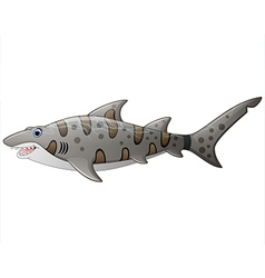close up tiger shark vector image