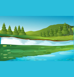 scene with pine trees by the river vector image