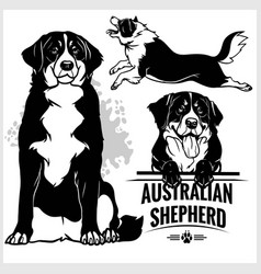 Australian shepherd dog - set isolated vector