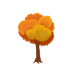 autumn tree with rounded crown vector image