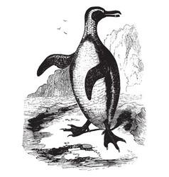 Jackass penguin vintage vector