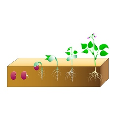 Seed germination vector image