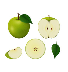 set of green apples of different shapes vector image