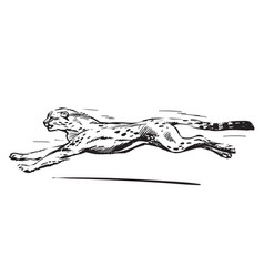 sketch running cheetah speed concept vector image