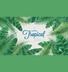 Tropical botanical plants background with leaves vector