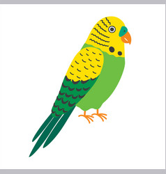 budgerigar green parrot budgie common parakeet vector image