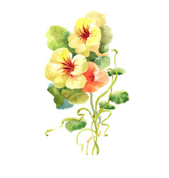 hand drawn flowers isolated on white background vector image