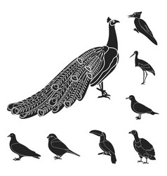 Types of birds black icons in set collection for vector